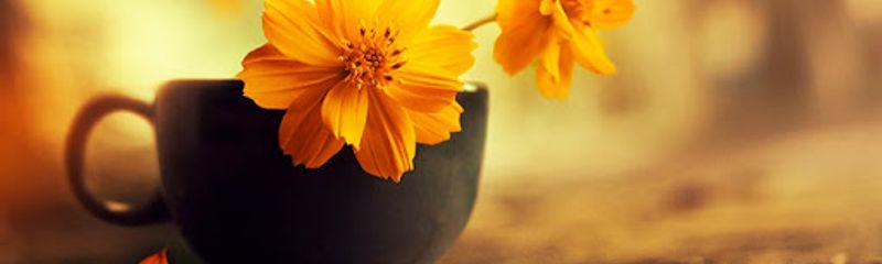 Vội vàng - Xuân Diệu