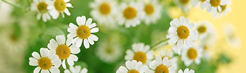 Mùa xuân nho nhỏ - Thanh Hải